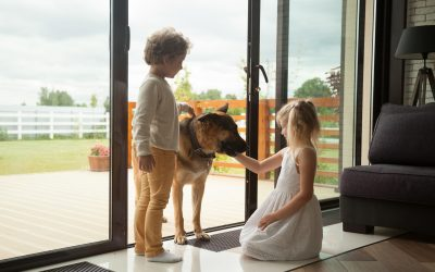 Pet-Friendly Home Security Systems
