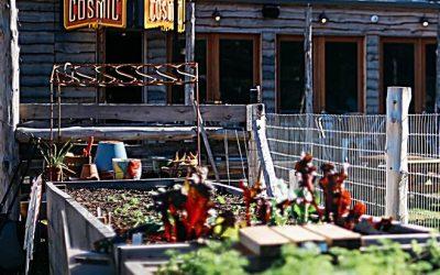 The Creation of Cosmic Coffee: Austin's Garden of Eatin'